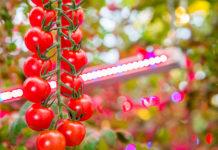 Horticultural Lighting