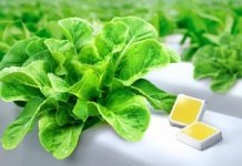 Samsung-Horticulture-LED