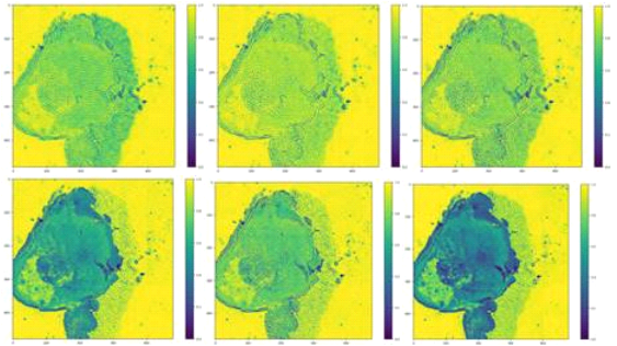 Caption: Six images at relevant wavelengths to differentiate tumor cells